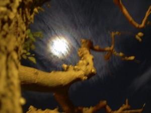 Corona lunar